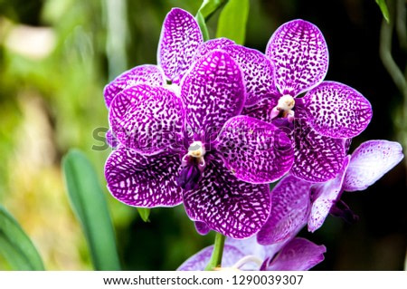 Orchid flowers are naturally beautiful. In an orchid farm.