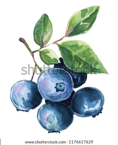 Watercolor illustration blueberries clipart