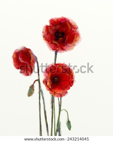 Red poppy flowers watercolor painting isolated on white background