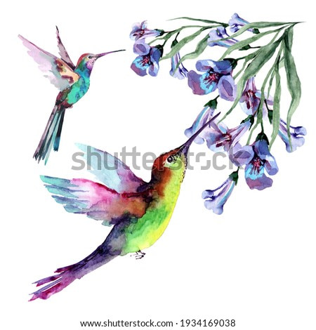Tropical birds hummingbirds in flight with outstretched wings collect nectar from flowers on branches with buds and green leaves. Watercolor for design of cards, invitations, print, background, cover.