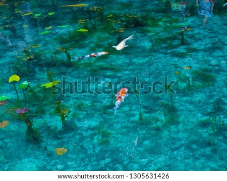 A transparent and beautiful simone pond that swims like a monkey pond similar to Japan's pond, a pond that looks exactly like Monet's paintings in Seiki, Gifu Prefecture, Japan's pretty beautiful plac