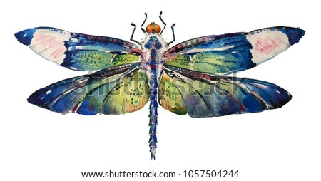 Isolated watercolour painting of dragonfly on white background