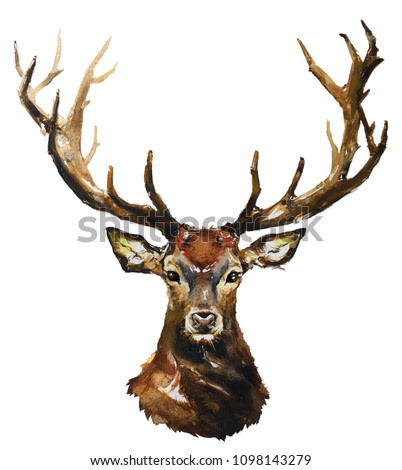 Isolated watercolour painting of deer face on white background