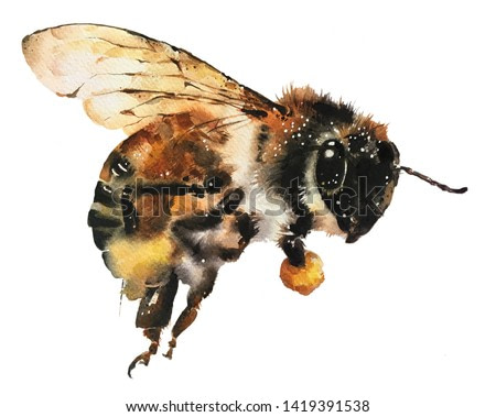 Isolated watercolour painting of flying bee holding honey on white background