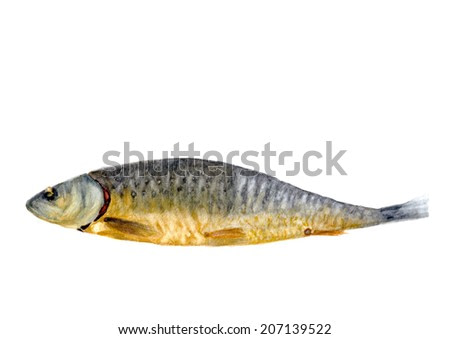 Watercolor smoked fish isolated on white background