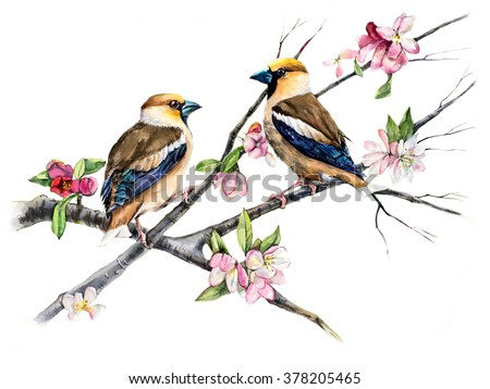 Grosbeaks on a branch with flowers. Decoration with wildlife scene. Pattern with two birds. Watercolor hand drawn illustration
