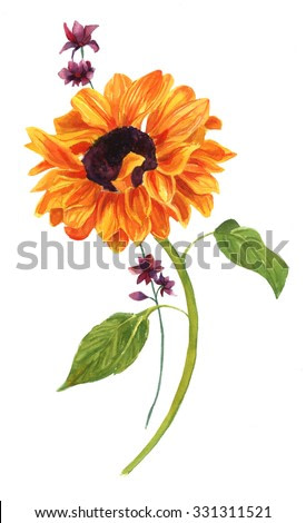 A watercolor drawing of a golden sunflower with green leaves and a bunch of purple flowers, on white background, vintage style botanical art