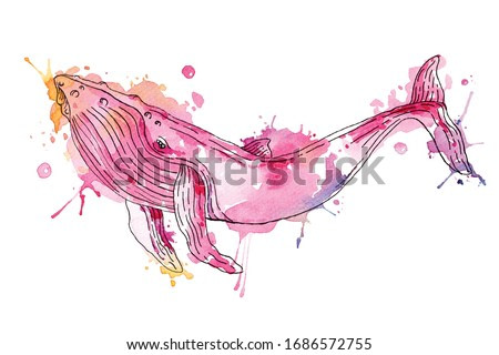 Painting of colorful whales painted with watercolors.Underwater animal illustration.Fish painting isswimming on a white background.Aquatic animals painted with brushes.