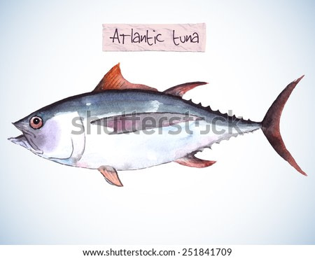 Hand-painted watercolor illustration of a sea fish - a tuna. Vectorized, isolated.