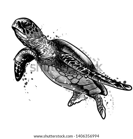 Sea turtle. Realistic, artistic, black and white drawing of a sea turtle on a white background in a watercolor style.