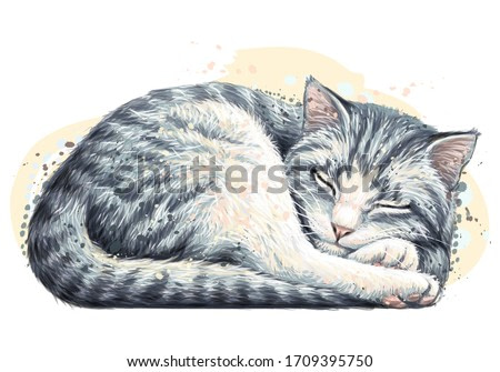 Cat. Wall sticker. Color, artistic, realistic portrait of a cute sleeping cat in watercolor style on a white background.