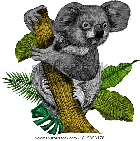 Koala bear sitting on a branch with palm leaves