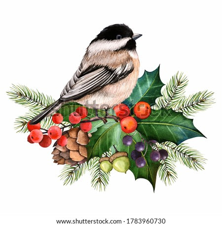 Christmas watercolor illustration.  Winter bird, red berry. Christmas bouquet.