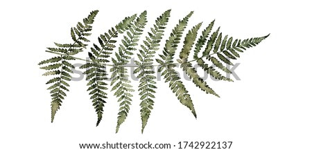 Fern watercolor illustration in dark green colors, greenery branch, twig, stem, forest plant for wall art, stationery