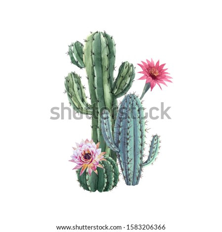 Beautiful watercolor cactus combination. Hand drawn stock illustrations. White background. Isolated objects.