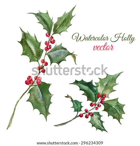 vector watercolor botanical drawing, Christmas arrowhead plant, red berries