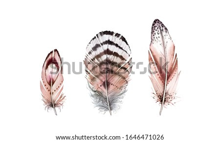 Watercolor feather set. Realistic painting with natural brown wings. Boho style illustration isolated on white. Wild bird feather collection in Rustic bright colors