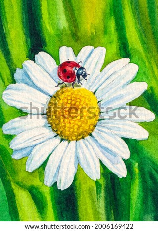 Ladybug on a chamomile. Daisy in the summer garden. White flowers with red insect bug. Watercolor painting. Acrylic drawing art. A piece of art.
