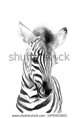 Sweet baby zebra. Watercolor illustration. Hand drawn portrait of forest animal.