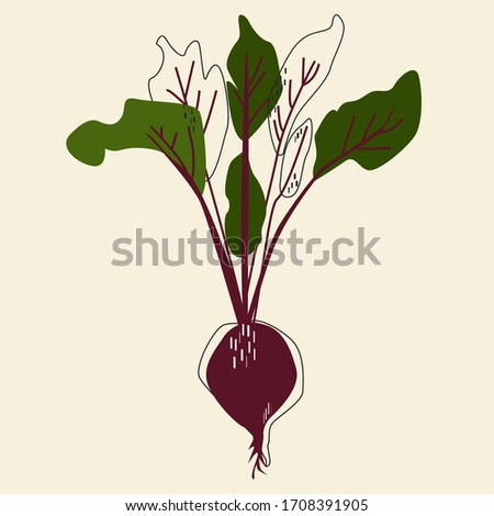 Color abstract vegetables isolated vector illustration. Beetroot wall art. Scandinavian style background.