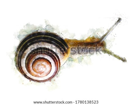 Watercolor Draw Style - Top view of a snail with a spiral shell