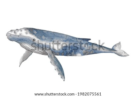 Animal Illustration: watercolor blue grey humpback whale.
