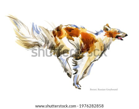 Russian Greyhound breed dog watercolor portrait isolated on white. Borzoi illustration.