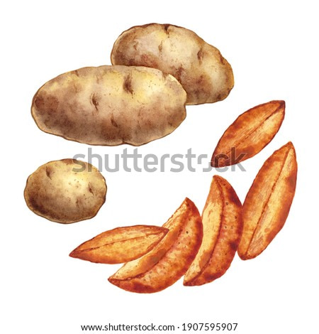 Isolated watercolor potatoes on white background. Tubers and fried pieces