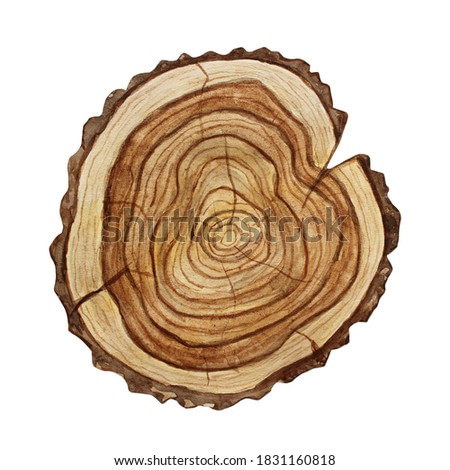 Cross section of tree trunk, stump, isolated on white background. Watercolor wood slice illustration.