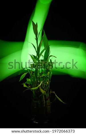 The plant with light painting background.