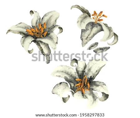 textured white lilies in watercolor style decorative elements