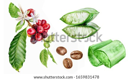 Aloe vera coffee watercolor isolated on white background