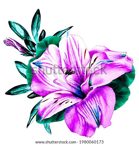 Watercolor lily flower isolated on white background. For the design of greetings, postcards, flyers, business cards, diaries.