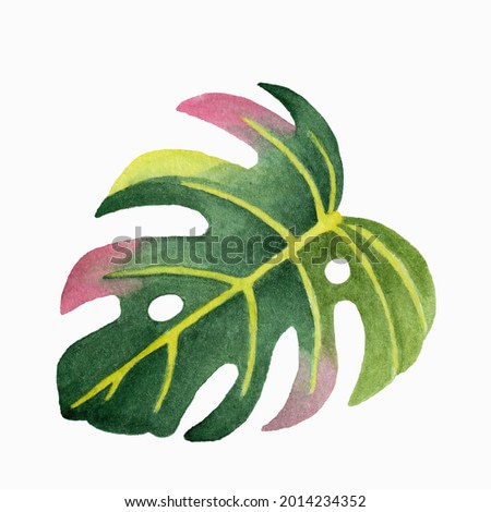 Watercolor illustration of a leaf of the monstera on a white background