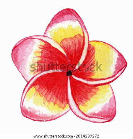 Watercolor illustration of a plumeria flower on a white background