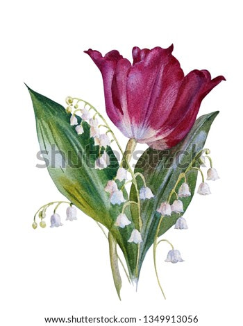 Spring  flowers. Tulip and lilies of the valley on a white background. Botanical illustration. Watercolor painting.