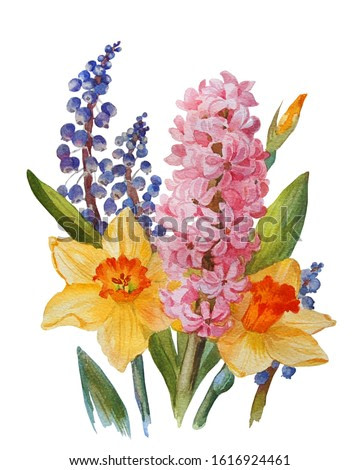 Floral background. Hyacinth, narcissus and muscari isolated on white background. Botanical illustration. Watercolor painting.