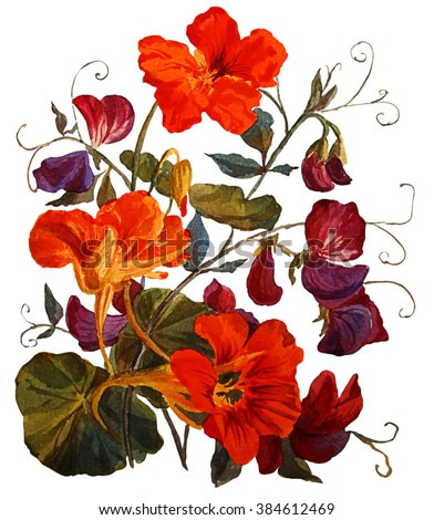 Nasturtium and sweet peas  flowers, isolated on white background. Botanical illustration. Watercolor painting.