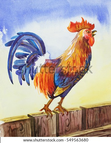 Rooster (cock), symbol of the year according to the Chinese calendar. Colorful, sitting on a fence and screaming cock-a-doodle-doo in the morning. Hand-drawn watercolor design for posters, postcards