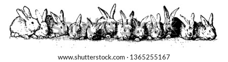This picture is showing twelve rabbits sitting in a line on the ground, vintage line drawing or engraving illustration.