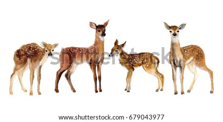 Watercolor Four Fawns Baby Deer.  Wildlife art illustration. Watercolor graphic for fabric, postcard, greeting card, book, poster, tee-shirt. Illustration, isolation objects