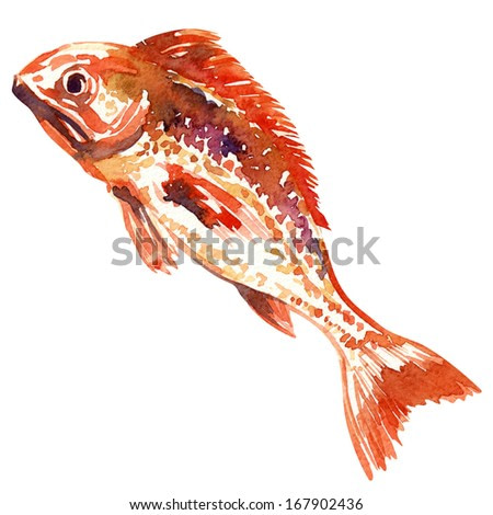 red fish. watercolor painting