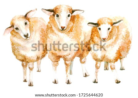 group of cute lamb in watercolor illustration on a white background