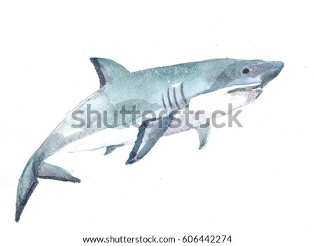 white shark on a white background. watercolor illustration