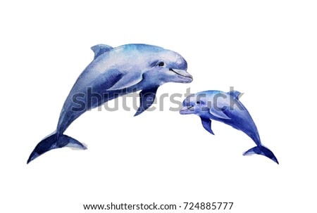 realistic dolphins on a white background. watercolor illustration