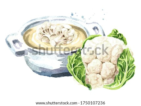 Vegetarian cream soup with Organic cauliflower. Hand drawn watercolor illustration isolated on white background