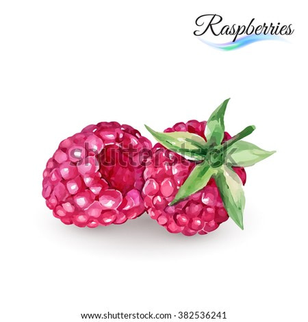 Hand-Drawn Watercolor Painting Raspberry on White Background