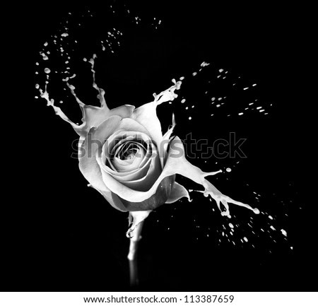 rose with red splashes on black background