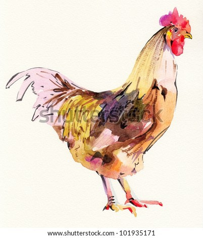 watercolor painting sketch cock. I am author of this illustration