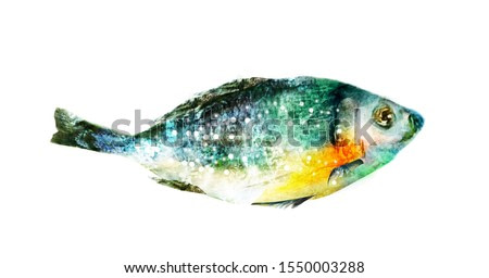 Watercolor fish on white background
